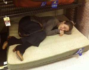 dog bed 1 crop